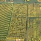 kukuruzu laukas